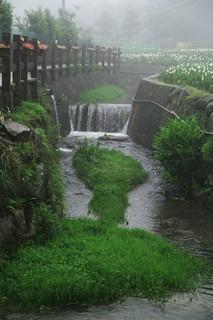 Yang Ming Shan 陽明山竹子湖