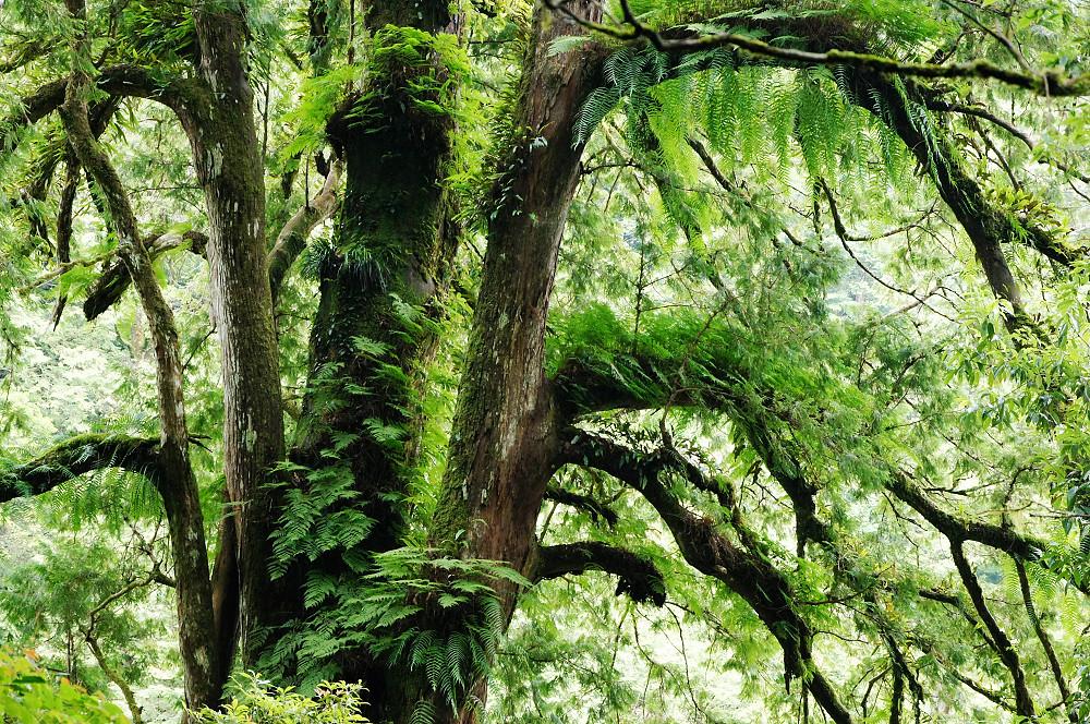 巨木群,與往拉拉山的路上-082