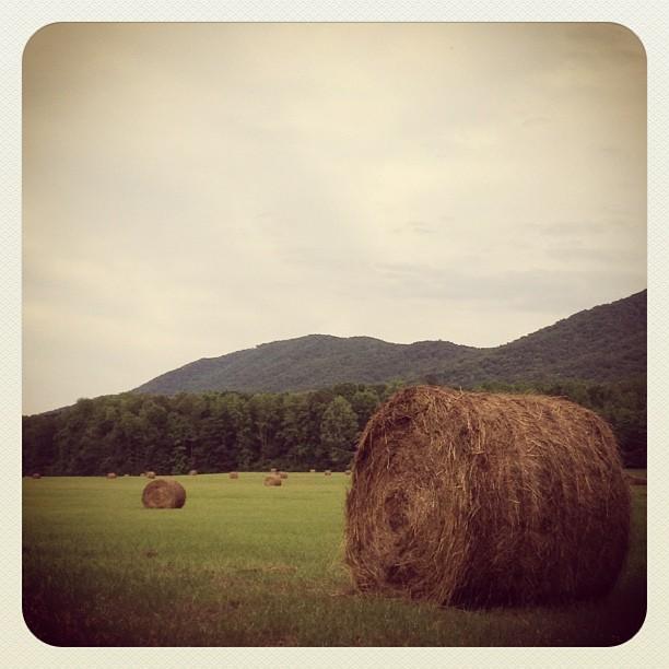 Foothills & hay