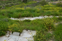 Bustan Qaraaqa農場內用廢棄紙箱正在養護的苗圃