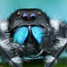 Bold jumping spider - Phidippus audax by Colin Hutton Photography