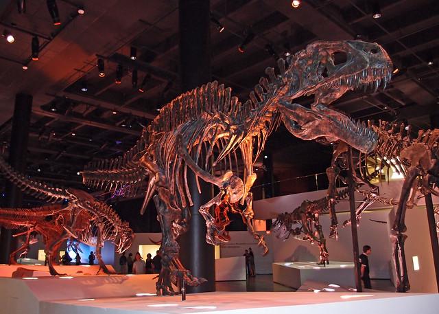 Dallas Museum Of Natural History Jobs