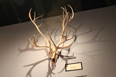 antler, sculpture, light, design,