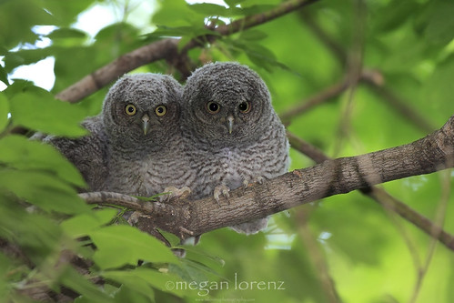 Two Of Five by Megan Lorenz