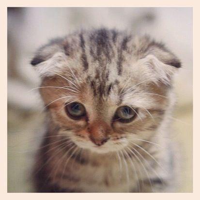 Sad Kitten | Nicolekiss - Travel & Lifestyle Blogger