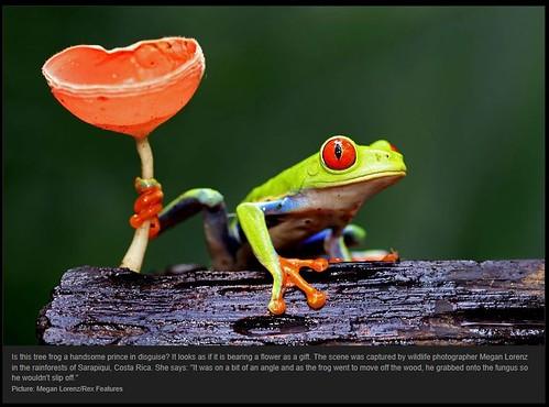 Frog Prince by Megan Lorenz