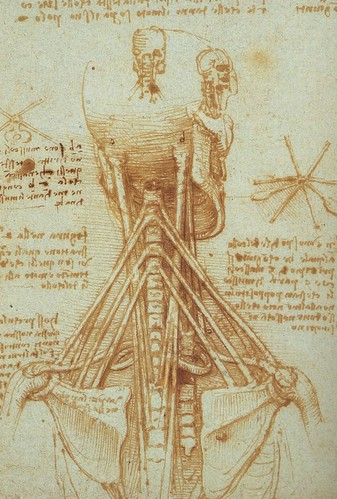 Neck and back - Leonardo Da Vinci