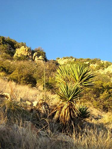 arizona dragoonmountains