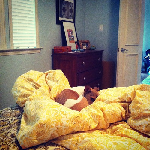 {Day 15} #yellow duvet / tan pup #junephotoaday