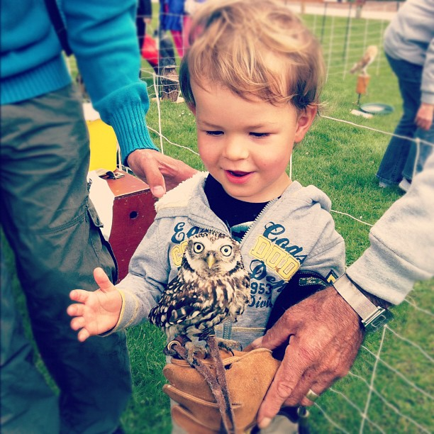 We're at a fair with all sorts of cool stuff and Dylan was allowed to hold this amazing little owl. :)