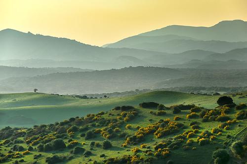 sunset españa andalucía spain paisaje andalusia cádiz espagne 70200mmf28gvr ilunabarra losbarrios nikkor70200mm d700 atarder nikond700 cerrromarcelo