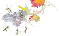 Thumbnail image for See you at Vini Veri 2012 – Wines by Nature!