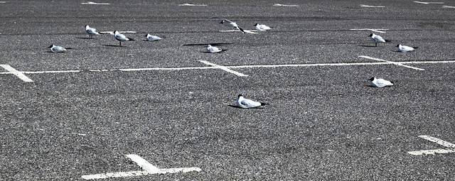 Seagulls Parking