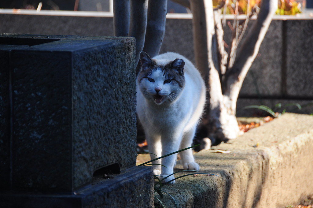 谷根千的貓