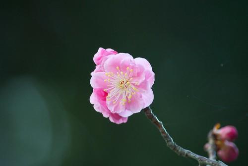 DSC_5605 by kuchijinja