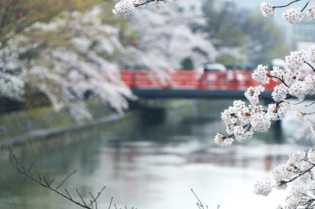 京都 平安神宮周辺