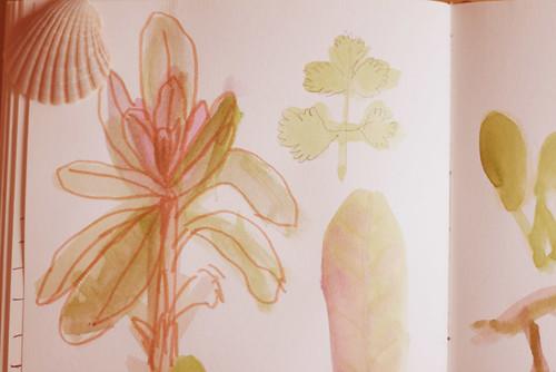 Garden Sketches 02