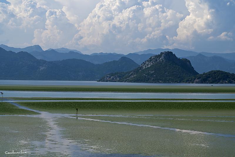 Skadarsko jezero 0016