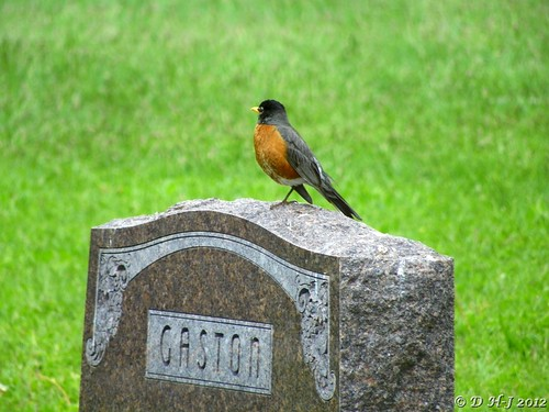 robin on gravestone