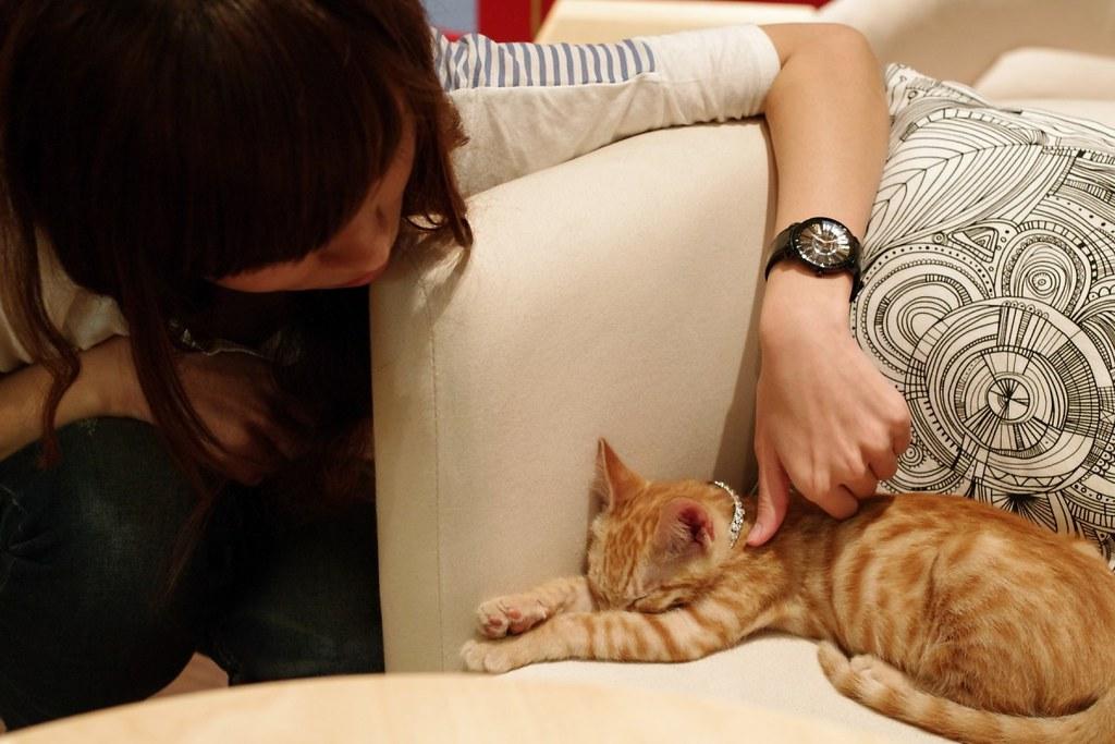 台中 貓‧旅行 輕食咖啡 [K7+DA35 2.4]