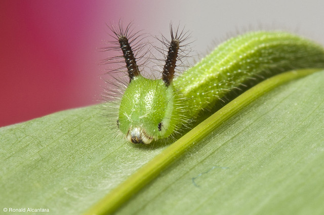 Cute Caterpillar!