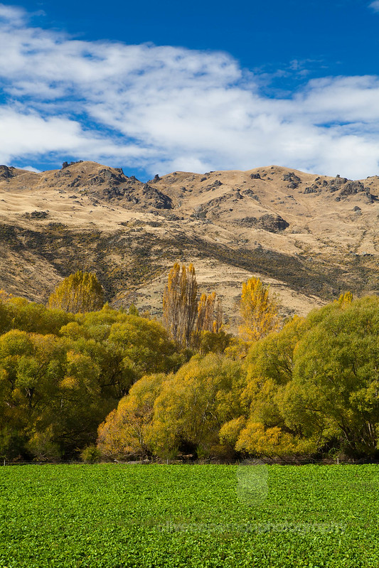 Cardrona Valley