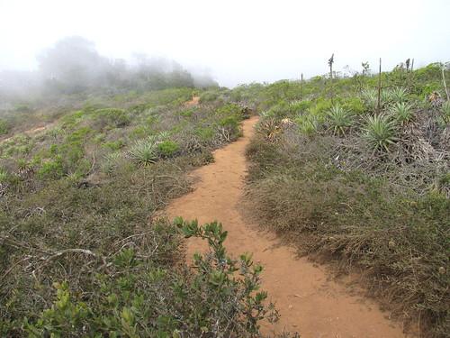 Sendero Parque Nacional Bosque Fray Jorge