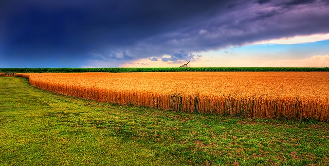Kansas Summer Wheat and Storm Panorama from Flickr via Wylio