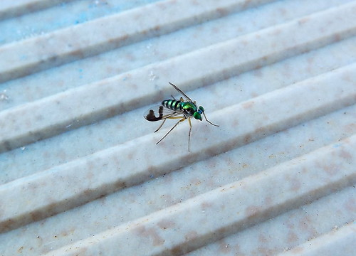 Long legged fly by smallfox2