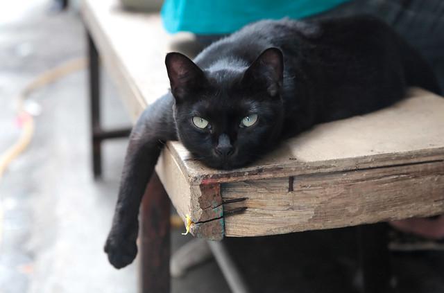 Market kitty