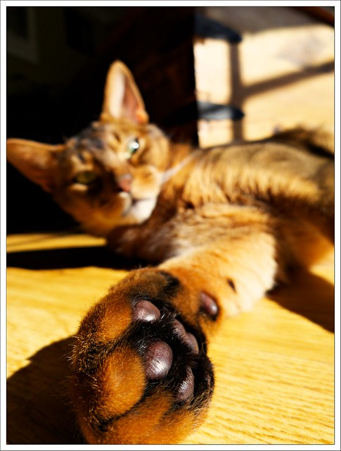 (161/366) Loki Ginorma-Foot!