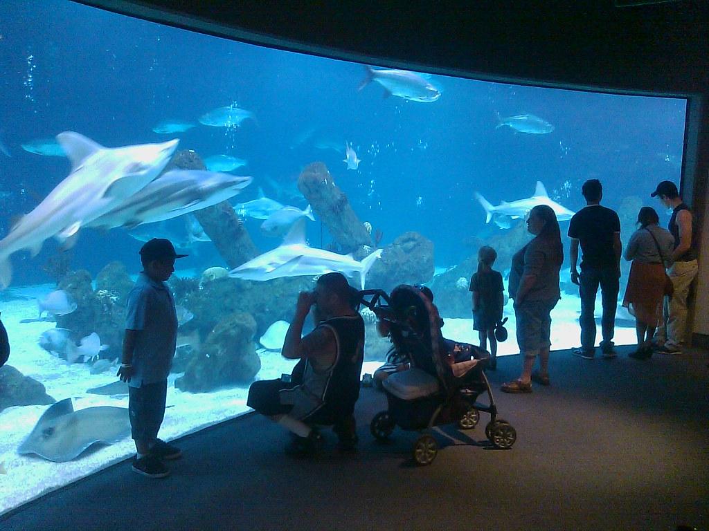 At the ABQ Biopark Aquarium
