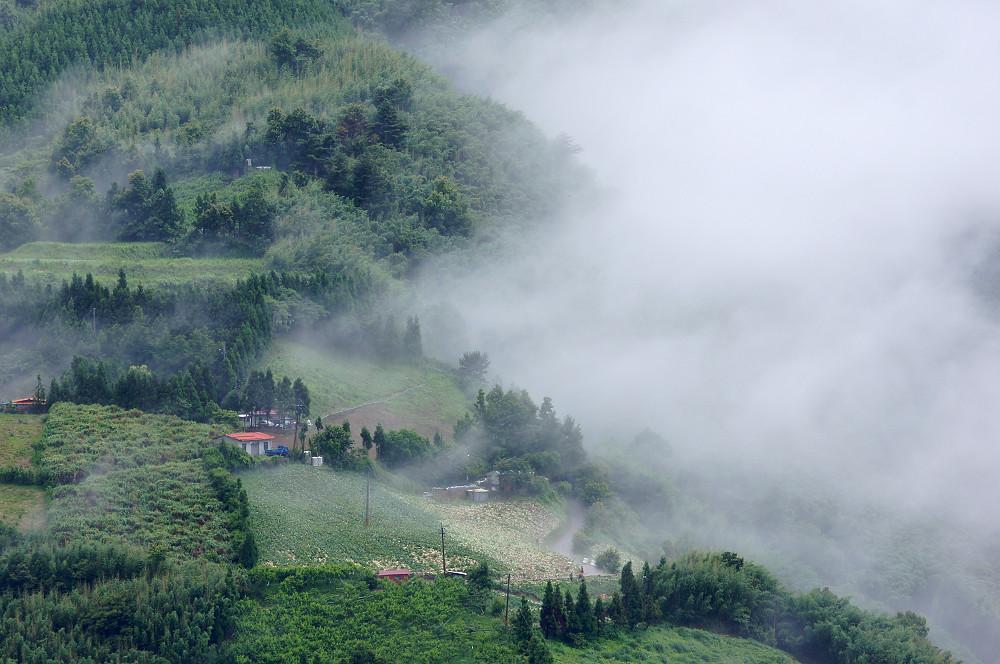 巨木群,與往拉拉山的路上-099