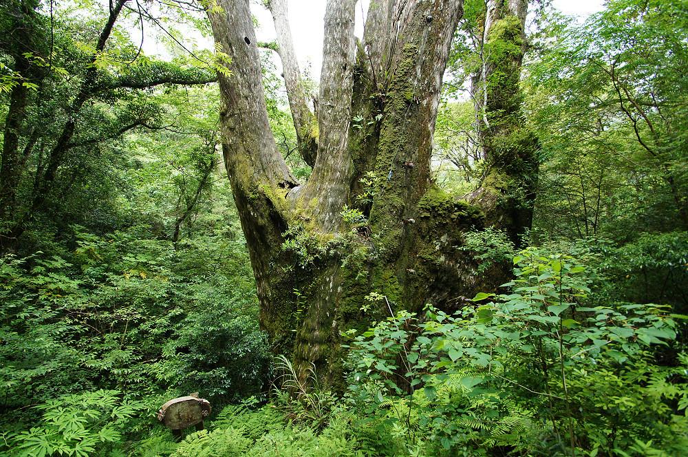 巨木群,與往拉拉山的路上-071