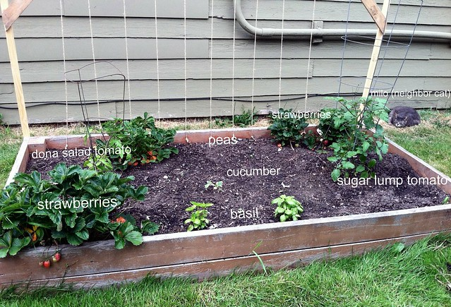 Raised Bed 2012