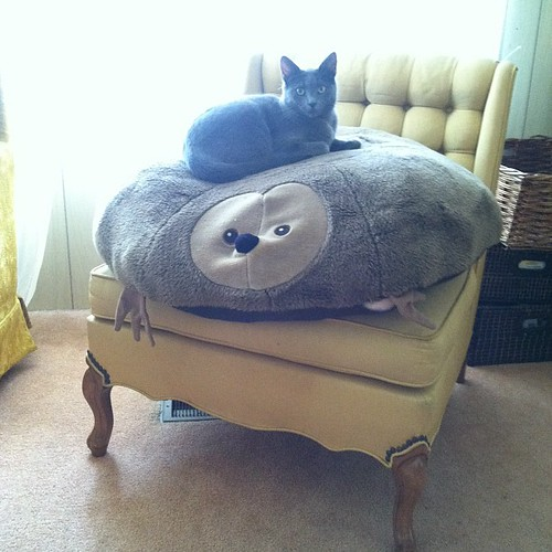 The dog deterrent does not deter cats.