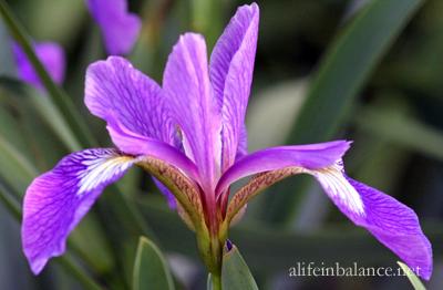 garden_blooms_4