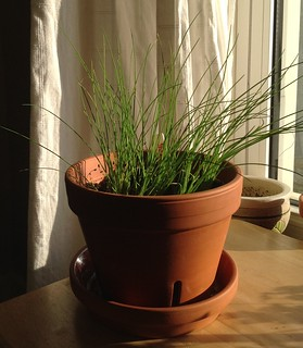 05-14-2012 Chives