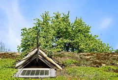 Skansen 2012 - Green roof