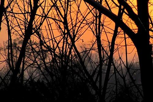 morning trees light orange sun mist black silhouette fog forest sunrise landscape virginia woods mood country stauntonriver roanokeriver brookneal campbellcounty