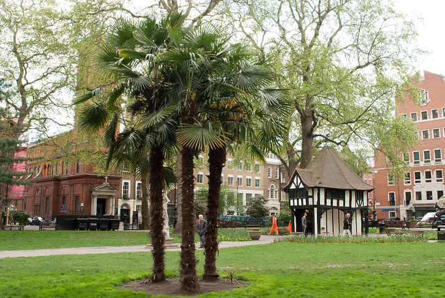 Palm trees in london flickr photo sharing for Garden trees london
