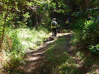 Peachester Forest