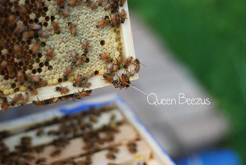 Queen Beezus