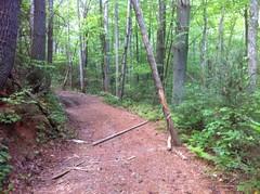 Precarious Log