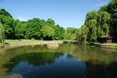 Reflet d'un étang à moitié vide