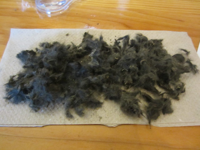 Fur in One Owl Pellet
