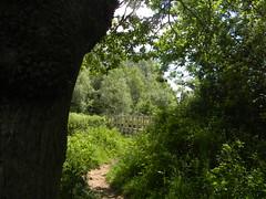 Glimpse of a bridge