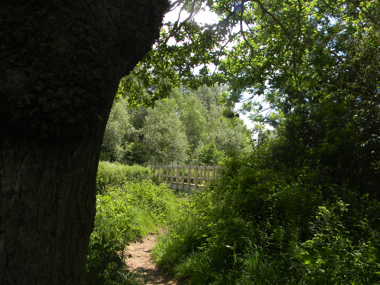 Glimpse of a bridge Uckfield to Lewes