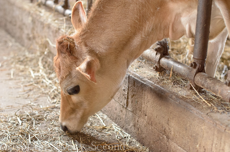 Hillside Farms-008.jpg