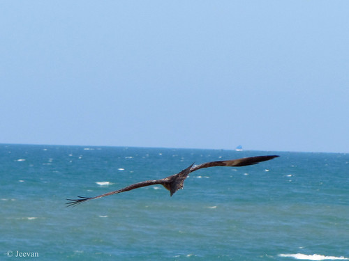 Flight over the sea